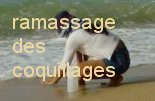 Rammassage de coquillages